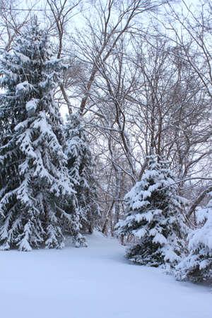 겨울 장면