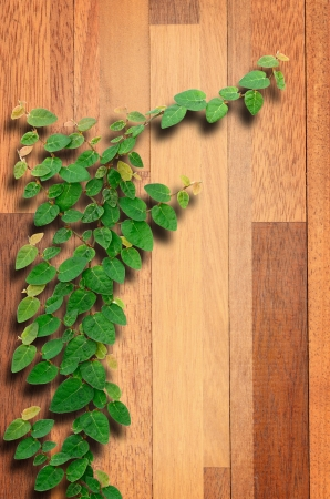 vetical: Ivy fixing climbing tree on brown wood texture.