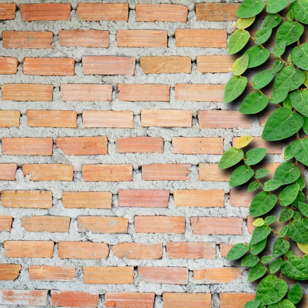 Brick wall with ivy fixing climbing tree background. photo