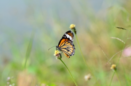 Butterfly on flower. photo