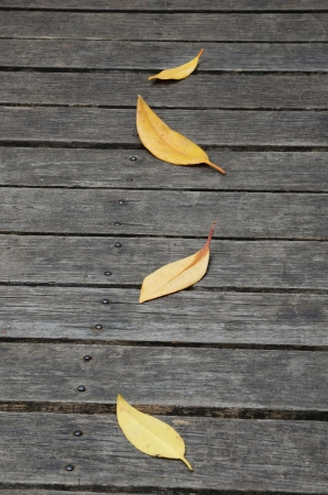 Dry leaves on wooden floor.  photo