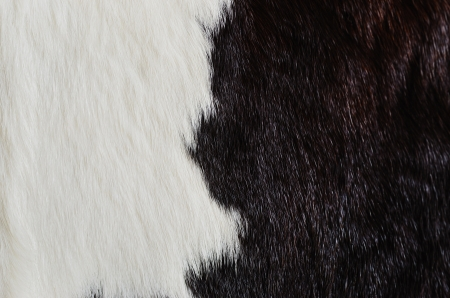 wildllife: Texture of real fur of animal.