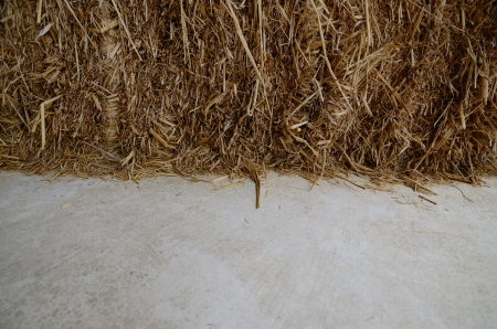 bale: Close up of hay straw on cement floor in the barn