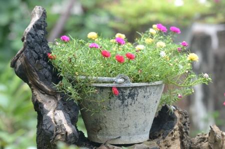 log basket: Flowere growing in old basket in garden.