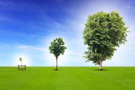 the big: proceso de vida de la planta joven de tamaño pequeño a mediano y creciendo con el crecimiento gran árbol, metáfora para el concepto de negocio en el desarrollo, que crece la economía, o la vida pasando. Foto de archivo