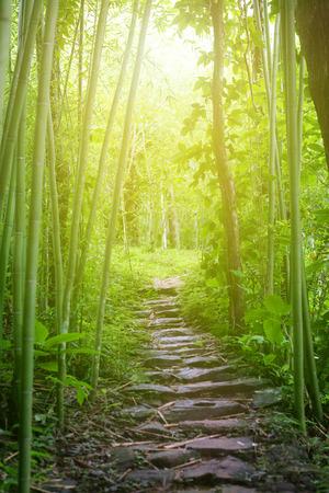 Gehen Weg durch tiefen tropischen Wald und grüne Bambuspflanze, Sonnenstrahl ray mit glühenden Lichteffekt.