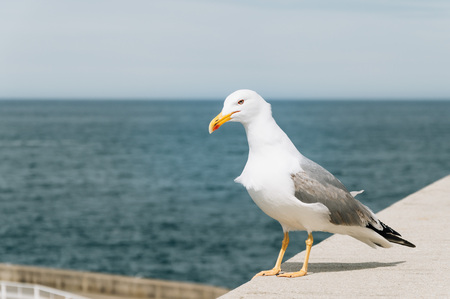 sea seaport: Seagull in a seaport with the sea on background with space for copy