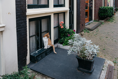 canal house: Amsterdam, Netherlands - August 1, 2016: Cat with flowers in the entrance of a canal house in Amsterdam