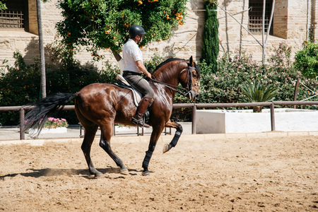 Cordoba, Spain - April 12, 2017: Horse rider riding a brown andalusian horse also known as Pure Spanish Horse in Historic Royal Stables of Cordoba.