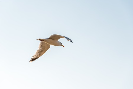 Seagull flying against sky with copy space