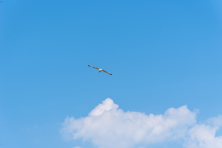 Seagull flying against blue sky with copyspace