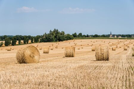Field with hay bales after harvest in summer