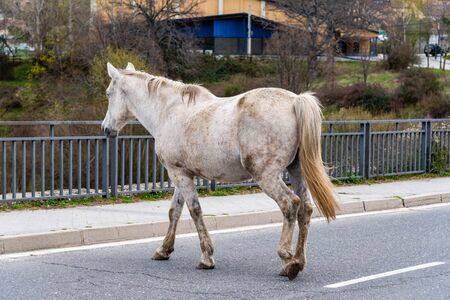 Old and dirty horse crossing a highway. Concept road safety and old age