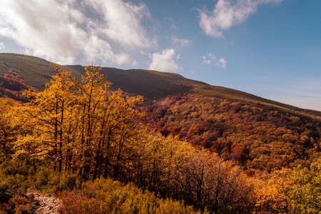 Beautiful autumn beech forest with yellow colors