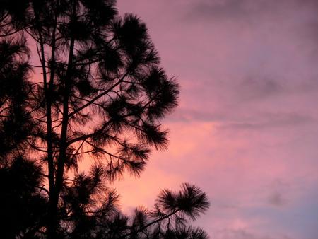 flagstaff: flagstaff sunset through the pines - az
