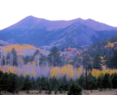 flagstaff: lockett meadow aspens in fall - flagstaff, az