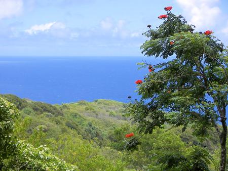 road to hana - maui, hawaii photo