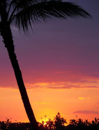 kona: sunset palm - kona, hawaii