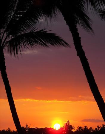 kona: sunset palm 2 - kona, hawaii