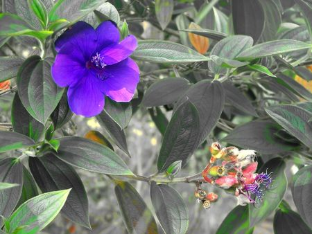 surreal hawaii jungle flowers graphic Reklamní fotografie