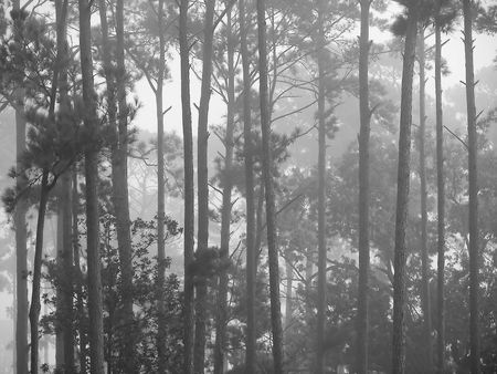 bayou swamp: louisiana bayou at sunrise
