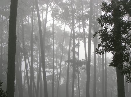 bayou swamp: bayou mist Stock Photo