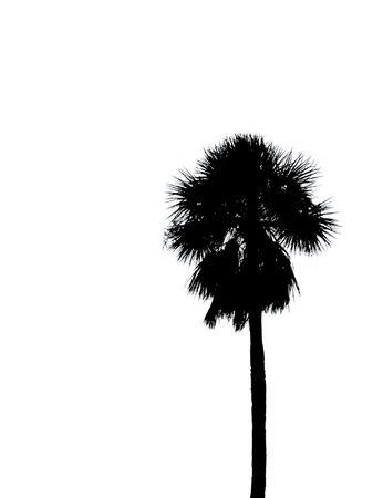 palm silhouette photo