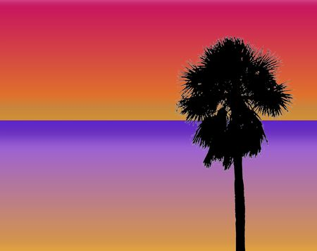 tropical palm sunset design photo
