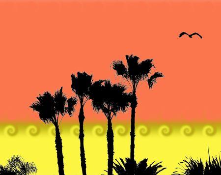 palms and bird silhouete graphic photo