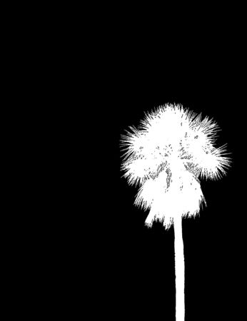 white palm outline on black photo