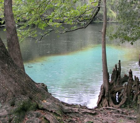meets: clear water meets muddy river - ginnie springs, fl