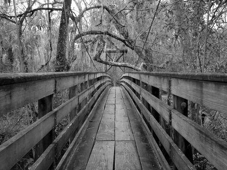 bayou swamp: bridge on the bayou