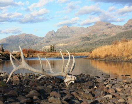 arri�re-pays: wapiti bois et l'arri�re-pays - Yellowstone NP Banque d'images