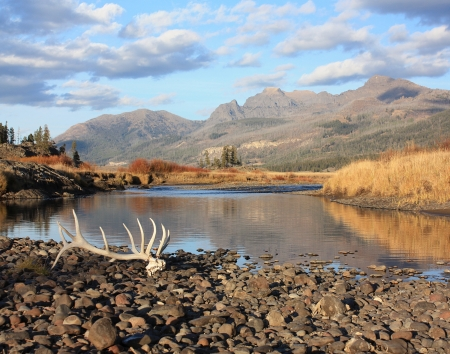 elk point: elk antlers in the backcountry - yellowstone national park