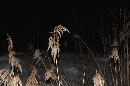 Dry, last years grass, sprinkled with snow, in the dark during the moonlight and artificial lighting. Great illustration Stockfoto