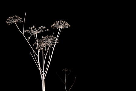 Dry, last years grass, sprinkled with snow, in the dark during the moonlight and artificial lighting. Great illustration 写真素材