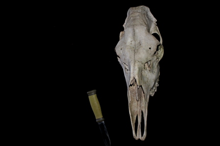 The skull of an adult moose of large size and a hunting knife, against the background of the night, the moon sky, in the predawn fog, with artificial lighting.