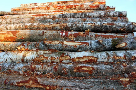 A large pile of trees, as a result of industrial logging. Stockfoto