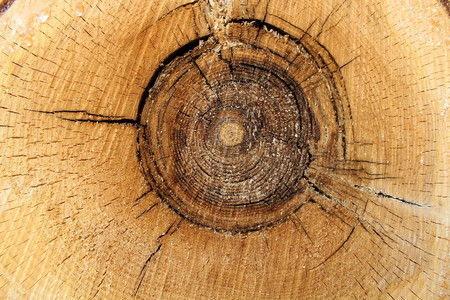As a result of industrial harvesting of wood.
