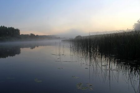 A medium-sized natural pond surrounded by vegetation at dawn dusk. Unique image of the surrounding nature Banco de Imagens