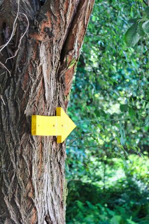 Yellow arrow signal showing the way to Saint James on a tree in Pontevedra