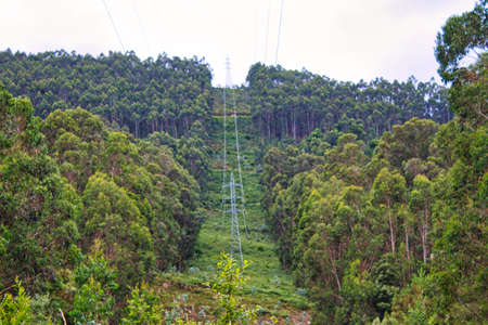 Power cables trough a forest in Galicia, Spain
