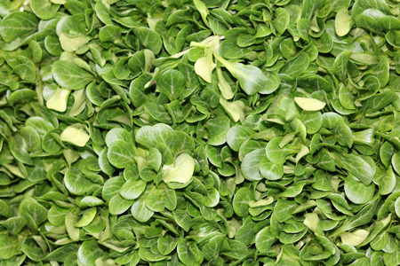 lettuce: lambs lettuce Stock Photo