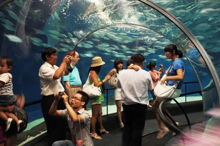 motion picture: Shanghai Ocean Aquarium, Shanghai, China, August 5, 2010 Editorial