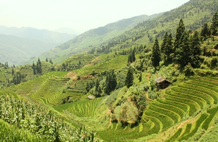 Rice Terraces, China photo