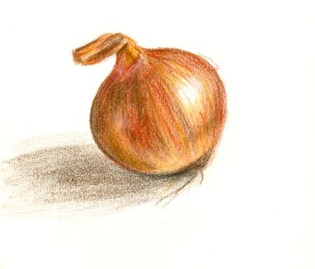 Onion Stock Photo - 8878865