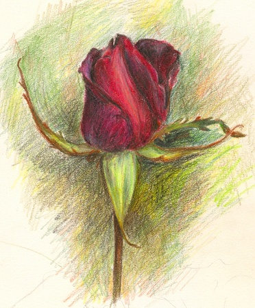 Pencilled Rose flower