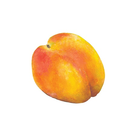 Hand painted peach Stock Photo - 9336915