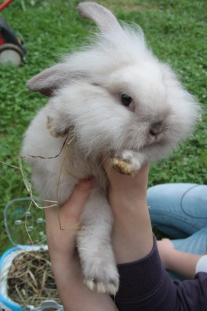 Little white rabbit in hands of his owner Stock Photo - 9738963