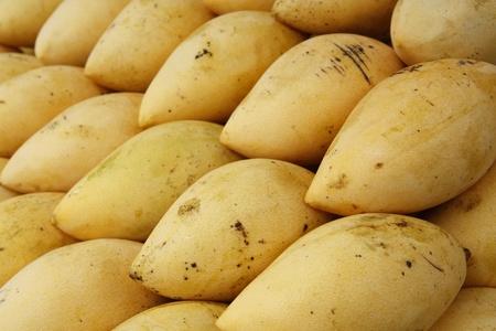 Mango Stock Photo - 10415904